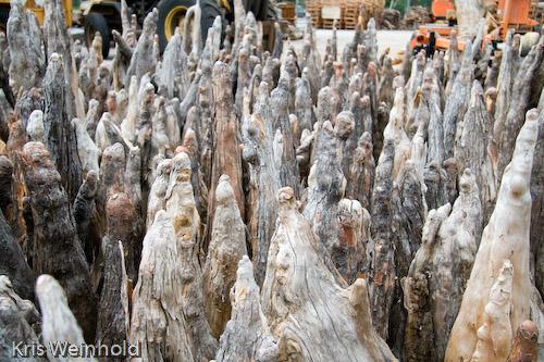 Tom's Cypress