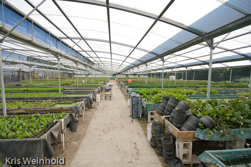 A Florida Aquatic Nursery Greenhouse