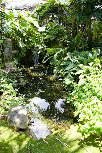 Orchid Nursery Crypt Pond