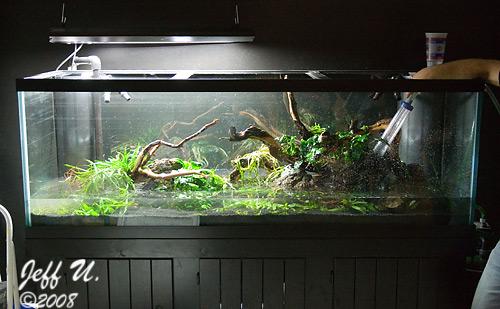 Dave's 180G aquarium